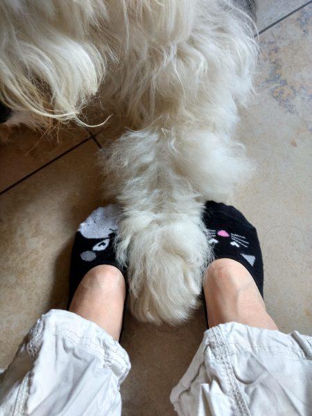 My Favourite Footsie